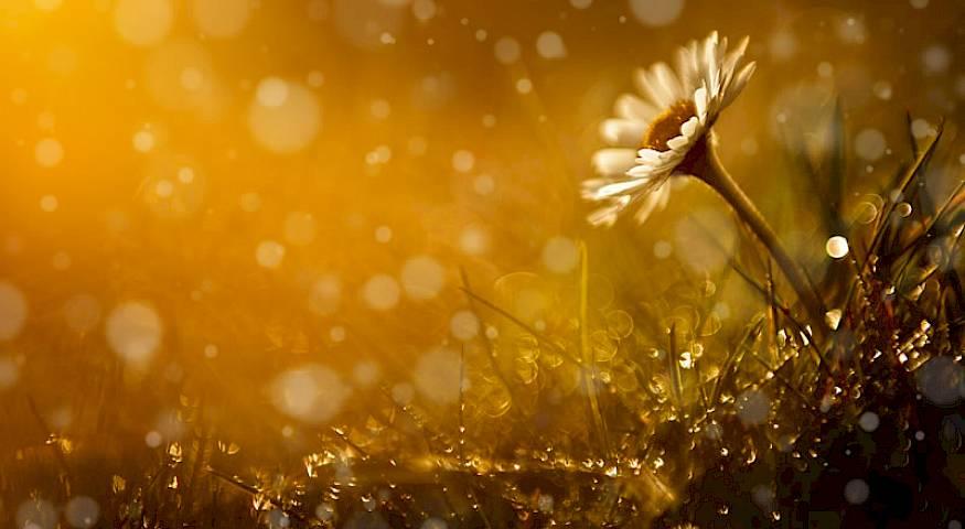 Mudre lekcije za sklad, sreću i mir