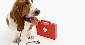 10 navika vlasnika kućnih ljubimaca koje izluđuju veterinare